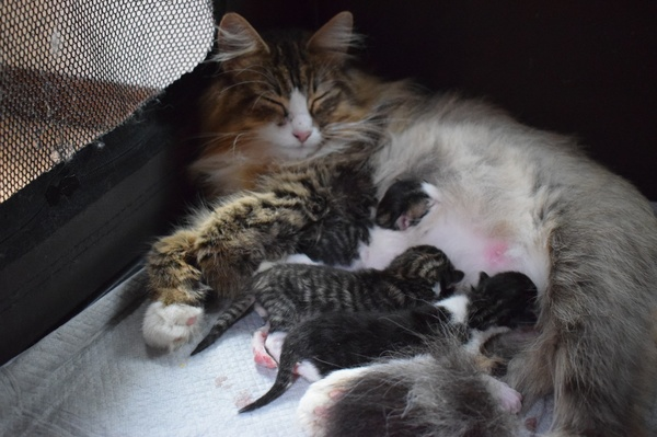 子猫が産まれました❤️